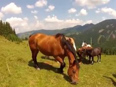 Horse Thug Life