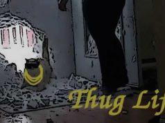 cat thug