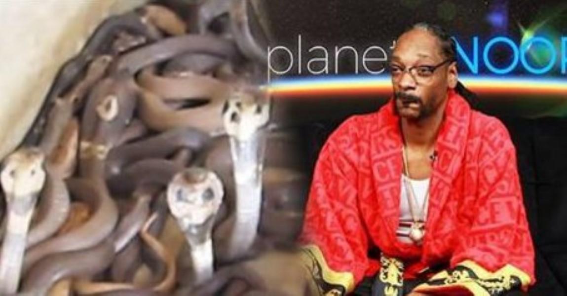 Planet Snoop