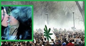 Weed Festival