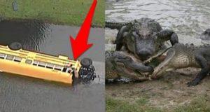 kid-saves-bus-from-alligators-1