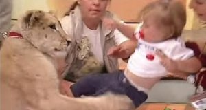 lion-attacks-baby
