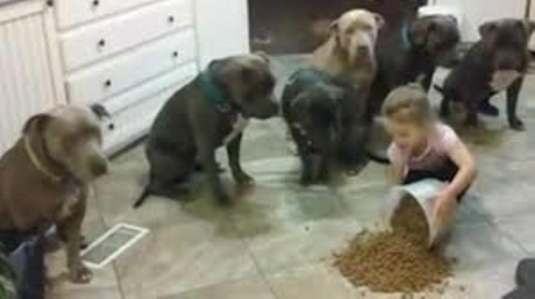 pitbulls-and-children-2