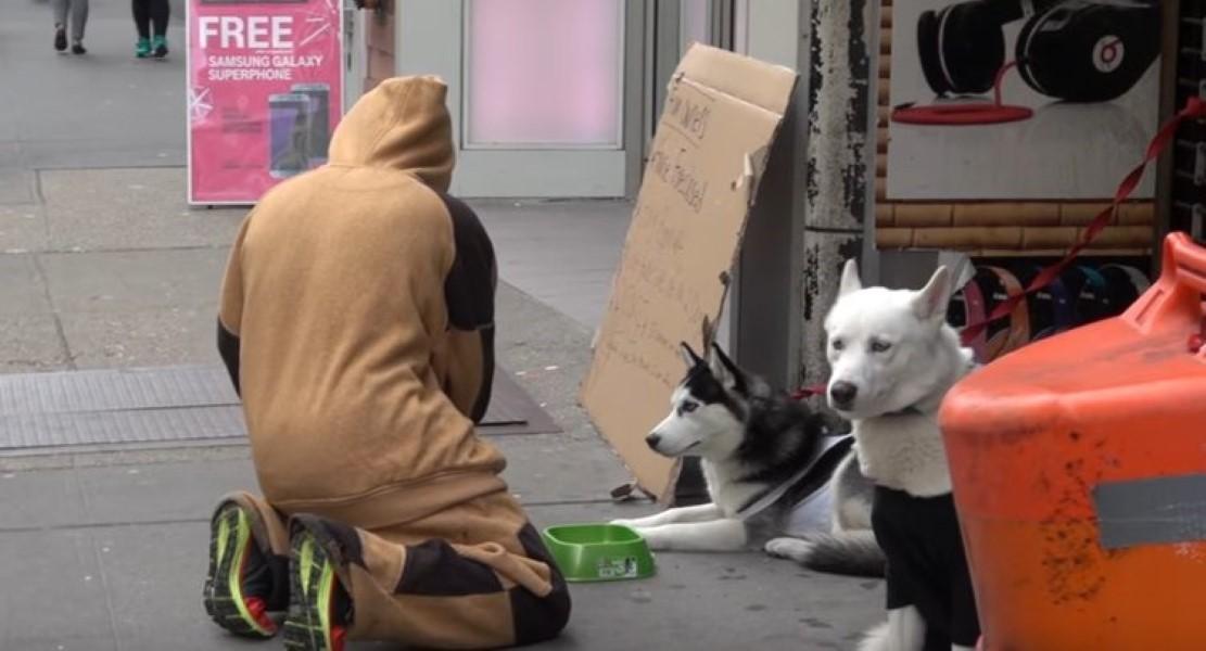 Abandoned dog Experiment (1)