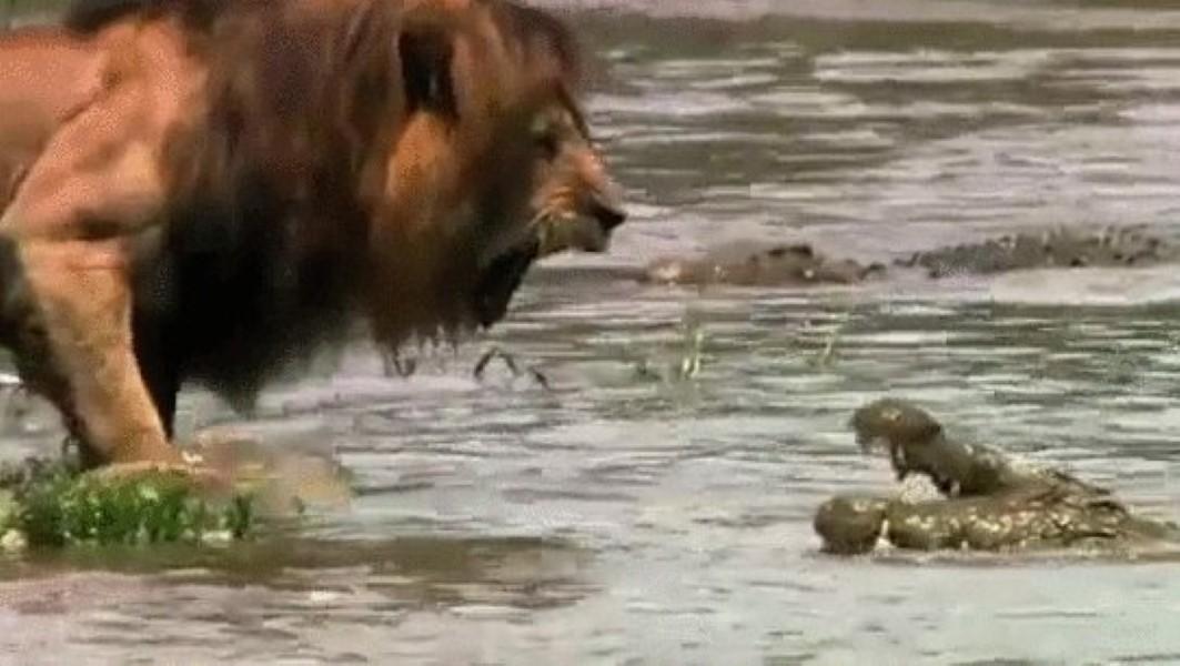 Predator Versus Predator