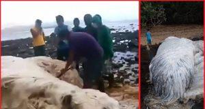 hairy-blob-sea-monsters-philippines-beach (1)