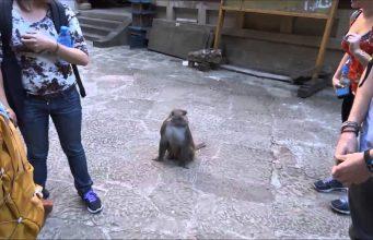 Monkey Thug