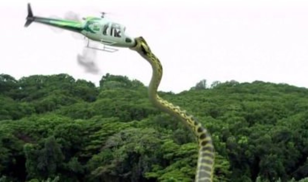Biggest Snake In The World Spotted At 195ft - Sighting ...