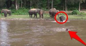 elephant-saves-human