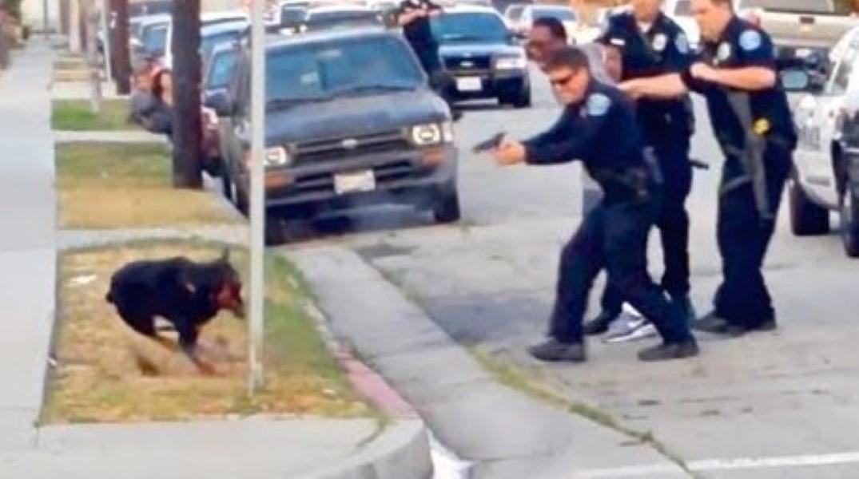 Cops Shoot  Dogs California