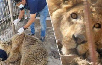 ISIS Killing Animals